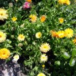 Blumen über Blumen